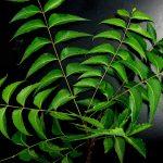 Crece la demanda de aceite de neem importado de Asia