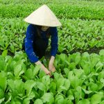 Vietnam, un país con gran potencial para importadores